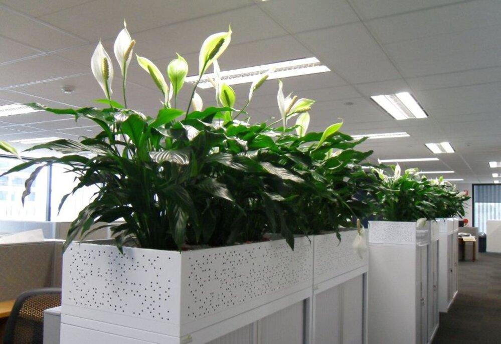 62c3087196f TOP 10: tervistavad toataimed kontoris