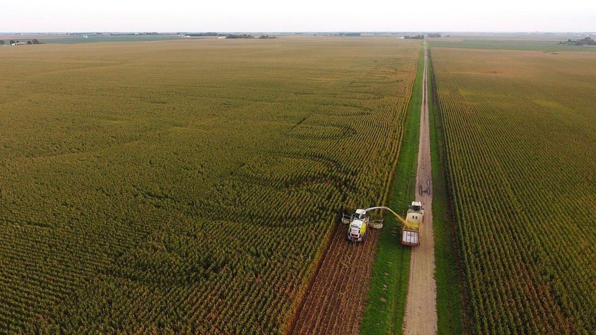 Aeg teha maisisilo - kordame üle põhitõed