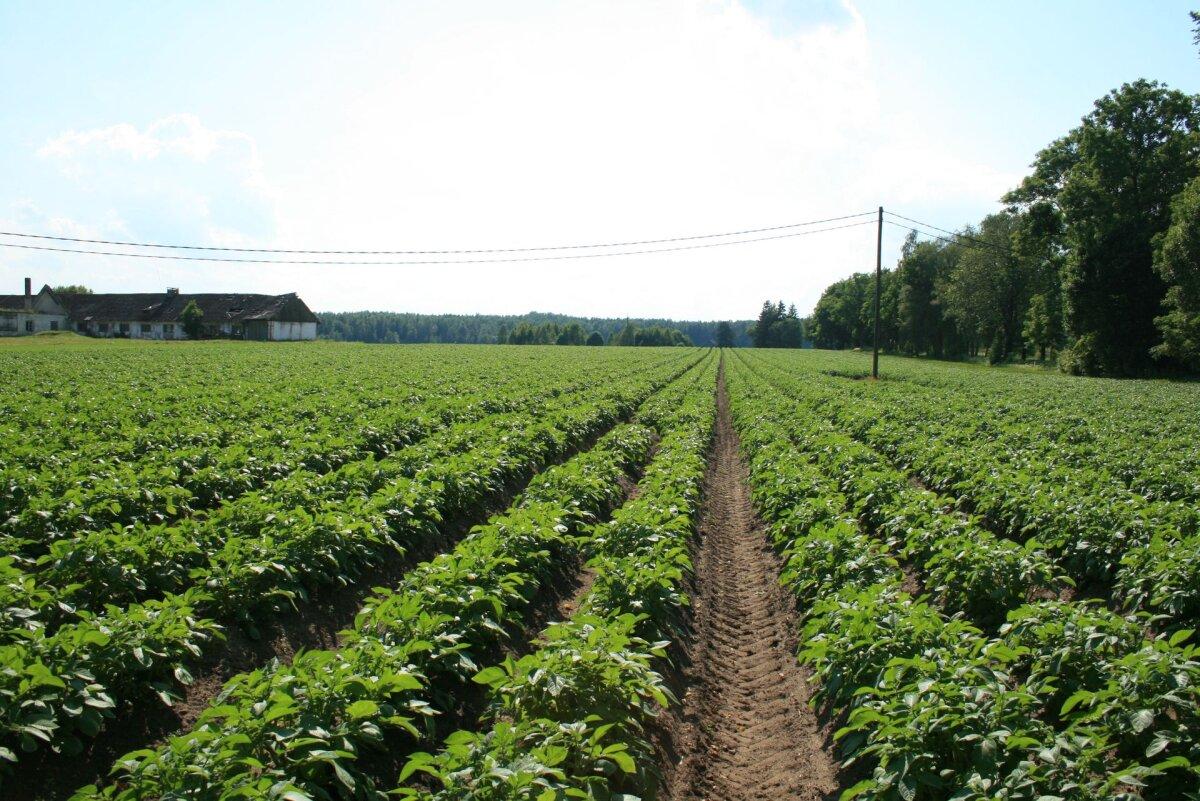 Valmib tegevuskava, et tarbija saaks suurema kindluse värske puu- ja köögivilja päritolu suhtes