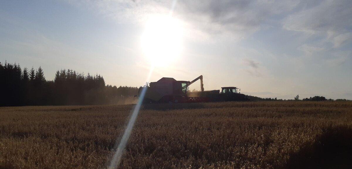 Päästev nädal – ilm lubab põllule