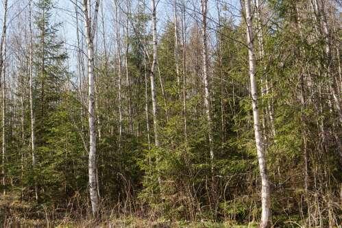 Metsanduse ekspert:  kasvav mets vajab pidevat hoolt