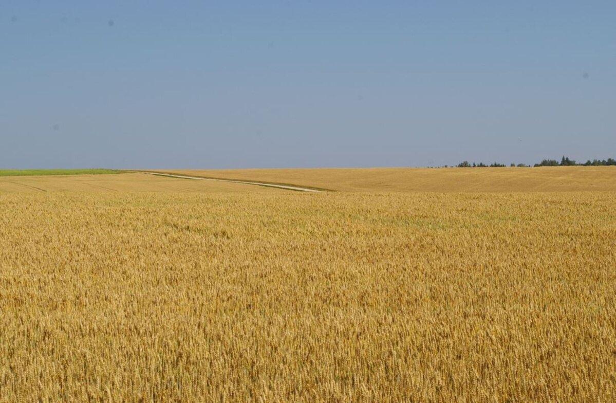 Börs: Euroopa nisuhinnad püsivad tugeval tasemel