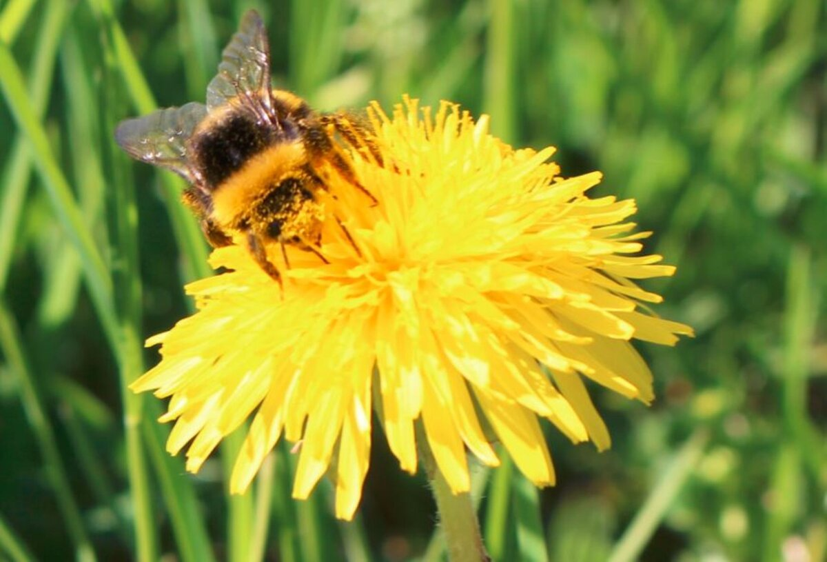 Pea 1400 mesinikku said mesilasperede toetust