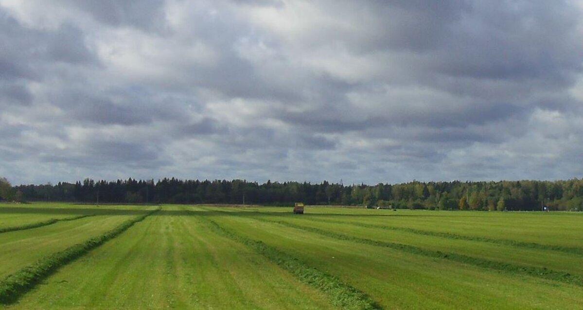 Mida peab teadma rohumaade väetamisest?