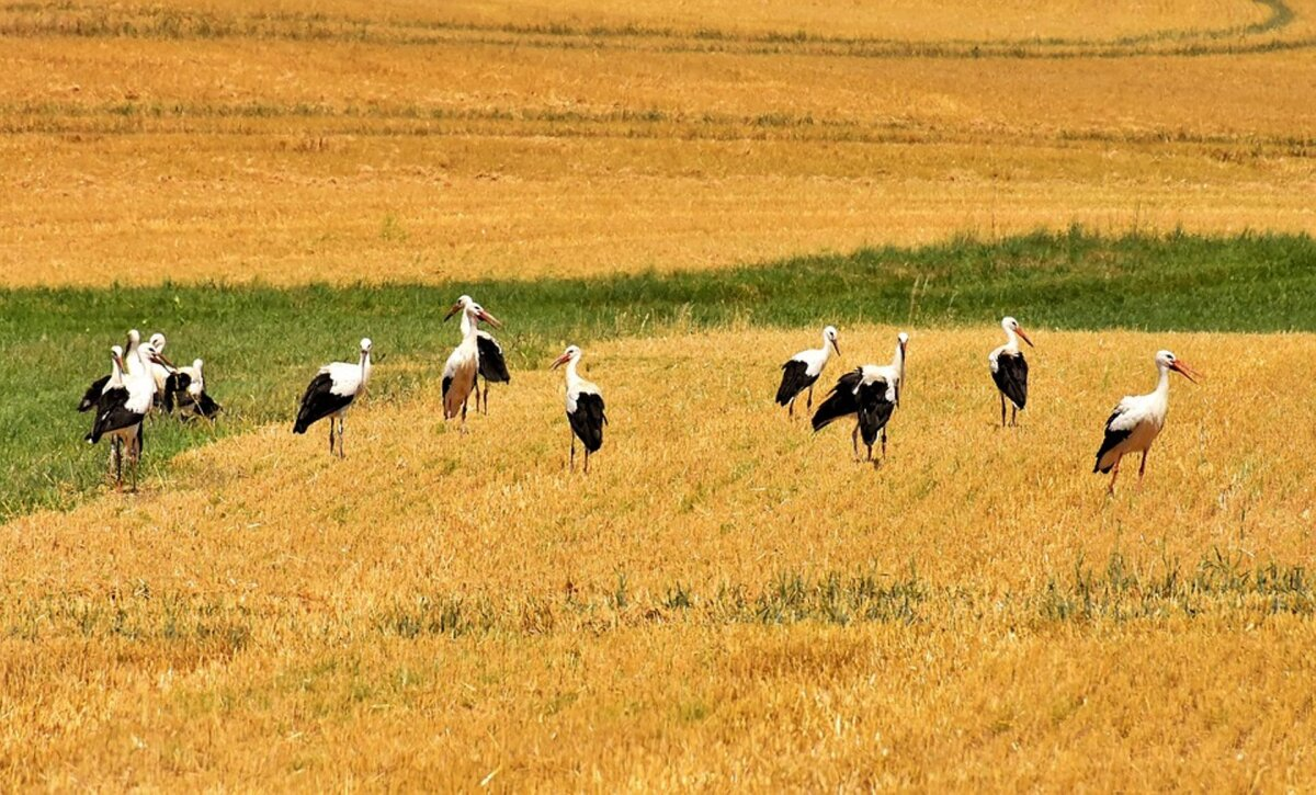 Põllumehed: keskkonnahoid on oluliseks osaks meie argipäevast