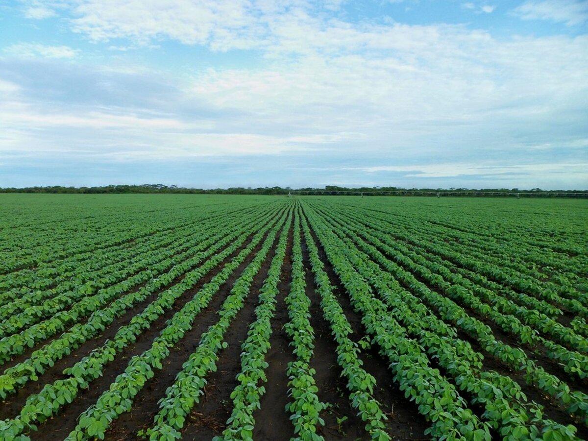 Börs: sojaubade ja rapsiseemnete hind tõuseb
