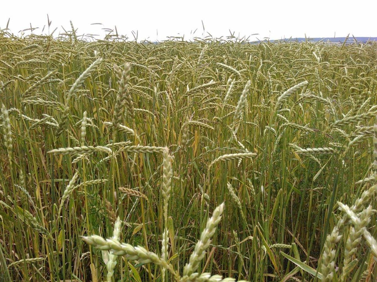 Mahepõllumajandus on säästva maakasutuse võtmetehnoloogia