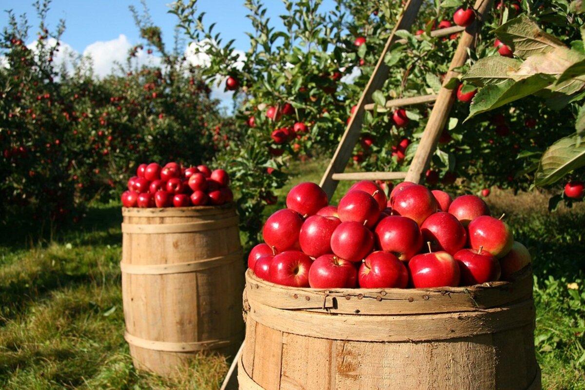 VTA on võtnud puu- ja köögiviljad ning marjad kõrgendatud tähelepanu alla